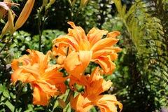 Yellow flower, Quinta da Regaleira Stock Image