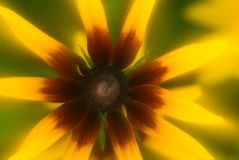 Yellow flower radiating energy Royalty Free Stock Photography