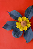 Yellow flower on red. Photo of yellow flower laying on blue leafs on red crimson background stock image