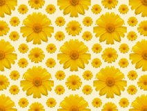 Yellow flower repeat background Stock Photography