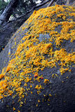 Yellow flower on the rock. In Temple, Thailand Stock Photos