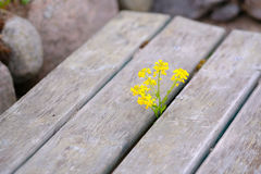 Yellow flower and rustic wood Stock Images