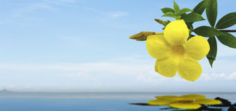 The yellow flower on the sea background. Yellow flower on the sea background Royalty Free Stock Images