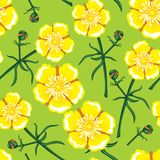 Yellow flower seamless pattern Royalty Free Stock Images