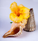 Yellow flower and shells Royalty Free Stock Photography