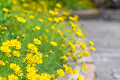 Yellow flower at sidewalk Stock Photography