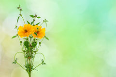Yellow flower and small tree on nature background . Royalty Free Stock Photo
