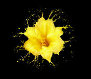 Yellow flower splashes Royalty Free Stock Images