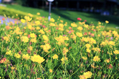 Yellow flower spring Stock Image