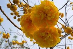 Yellow, Flower, Spring, Flowering Plant stock image