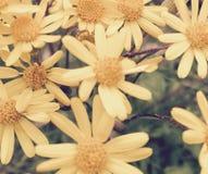 Yellow Flower Springtime. Pretty Yellow Flower Spring Royalty Free Stock Image