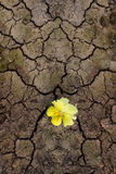 Yellow Flower Sprouting Through The Cracks Royalty Free Stock Photography