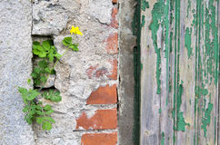 Yellow flower on a stone wall Stock Photography
