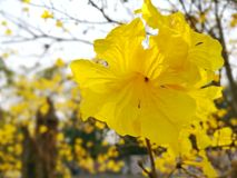 Yellow Flower. Beside Street Royalty Free Stock Photography