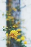 Yellow flower in summer garden Stock Photos