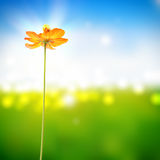 Yellow flower on sunny bokeh background Royalty Free Stock Images