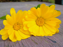 Yellow flower on table Stock Photography