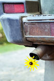 Yellow Flower in a Tail pipe. Closeup of an old car tail pipe with a flower, concept of environment and ecology Royalty Free Stock Photo