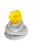 Yellow flower on top of a stack of pebbles Stock Photos