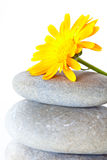 Yellow flower on top of a stack of pebbles Royalty Free Stock Photography