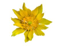 Yellow flower on transparent background in the additional png file