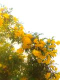 Yellow flower. Tree Stock Photos