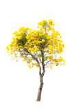 yellow flower and tree Royalty Free Stock Photos