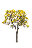 yellow flower and tree Stock Photos