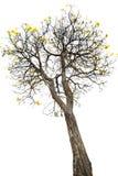 yellow flower and tree Stock Photo