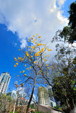Yellow flower tree at Cathedral Square Stock Photo