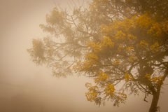Yellow flower tree in Paranapiacaba, Brazil Stock Image