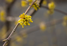 Yellow flower on a tree Royalty Free Stock Photos