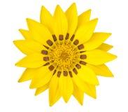 Yellow flower tulip Royalty Free Stock Image