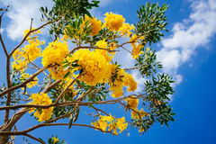 Yellow flower under blue sky. Bright yellow flower under the clear blue sky Royalty Free Stock Photos
