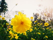 Yellow flower under the sky Stock Images