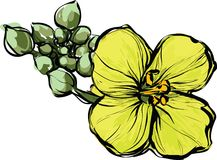 Yellow flower with unopened buds. Color image of Figure vector illustration