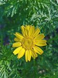 Yellow flower up close with green background. Up close look at the center of a yellow flower 4k Stock Photos