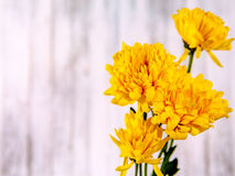 Yellow flower and valentine days Stock Image