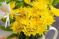 The yellow flower in the vase royalty free stock photo