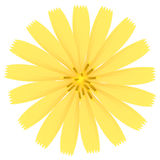 Yellow flower. Vector Illustration. Royalty Free Stock Photography