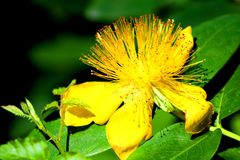Yellow Flower, waterfalls of Las Animas. Royalty Free Stock Photography