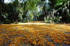 Yellow flower way. Yellow flowers that have fallen to the ground making for a pretty way. Found at a park in Barcelona called Montjuic Stock Photo