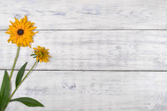 Yellow flower on white background. Stock Photo