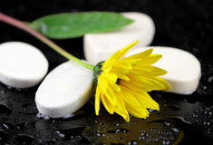 Yellow flower and white stones with water drops Stock Photo