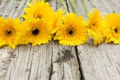 Yellow flower. On wood background Stock Photo