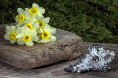 Yellow Flower on Wooden Plank Beside White Shell Stock Photography