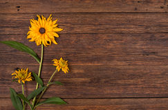 Yellow flower on wooden table background. Stock Photo