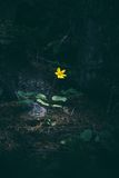Yellow flower in woods Royalty Free Stock Photos