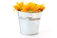 Yellow flowering Chrysanthemums in a bucket Stock Images