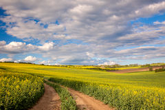 Yellow flowering fields and ground road overlooking a valle Stock Image